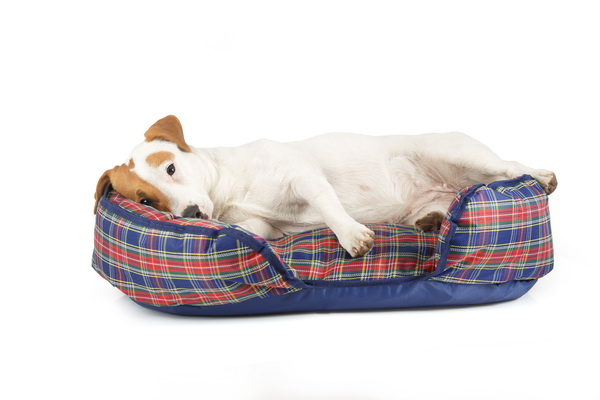 Лежак для собак Titbit, ортопедический, с наполнителем из лузги гречихи, 70 см х 45 см х 20 см0120710Лежак Titbit обладает уникальными ортопедическими свойствами. Перераспределяет нагрузку на мышцы и суставы о время сна. Способствует быстрому восстановлению физической формы животного. Обладает теплоизоляционными качествами. Лузга гречихи природный гипоаллергенный материал, уникальный по своим качествам. Благодаря ее структуре лежак принимает удобную форму для животного и обеспечивает полноценный отдых.Наполнитель: лузга гречихи, синтепон.