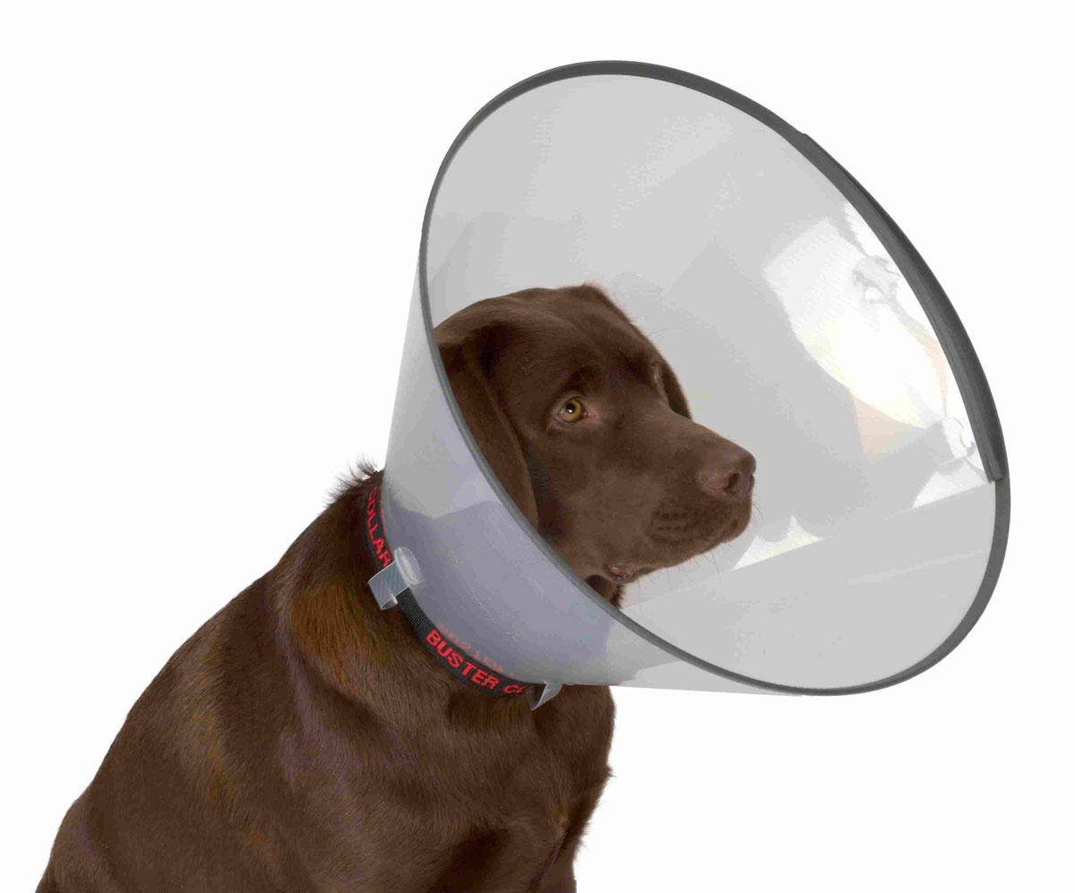 Защитный воротник для животных Kruuse Buster, высота 20 см. 273904273904Защитный воротник Kruuse Buster изготовлен из высококачественного нетоксичного пластика, который позволяет сохранять углы обзора для животного. Изделие, оснащенное защитным резиновым ободком, разработано для ограничения доступа собаки к заживающей ране или послеоперационному шву. Простота в эксплуатации позволяет хозяевам самостоятельно одевать и снимать защитный воротник с собаки. Подходит для собак средних пород.Обхват шеи: 24-28 см.Высота воротника: 20 см.