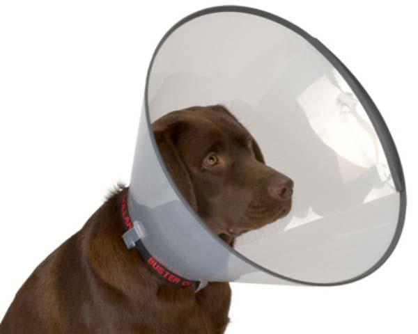 Защитный воротник для животных Kruuse  Buster , высота 25 см. 273905 - Ветеринарная аптека