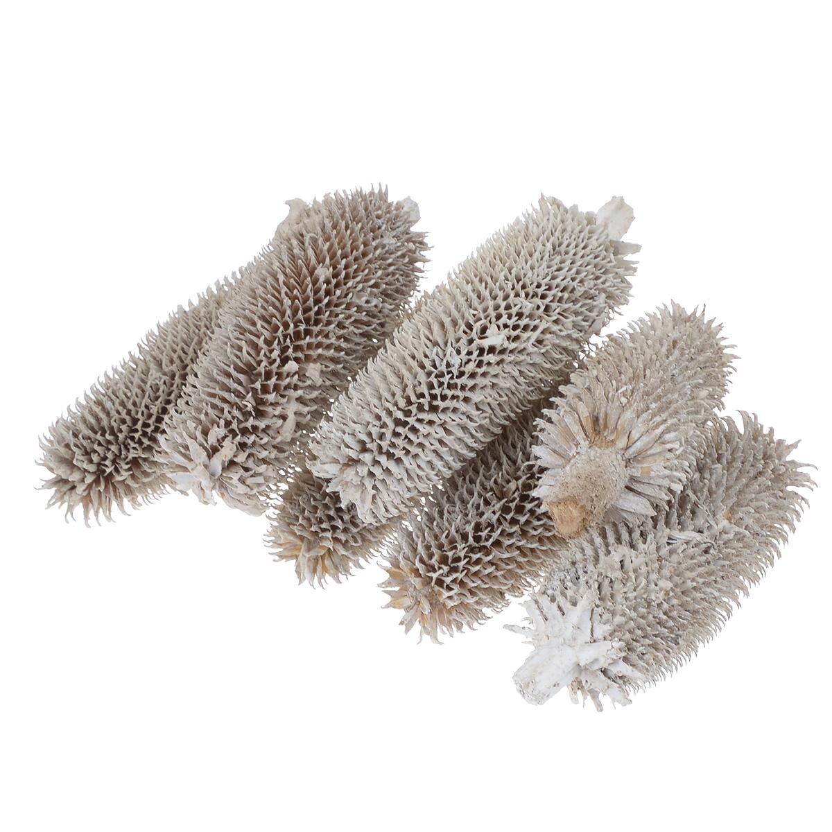 Декоративные элементы Dongjiang Art, 100 г. 7708957RSP-202SДекоративные элементы Dongjiang Art изготовлены из природного материала и предназначены для украшения цветочных композиций. Флористика - вид декоративно-прикладного искусства, который использует живые, засушенные или консервированные природные материалы для создания флористических работ. Это целый мир, в котором есть место и строгому математическому расчету, и вдохновению. Средний размер элемента: 3,5 см х 3,5 см х 12 см.