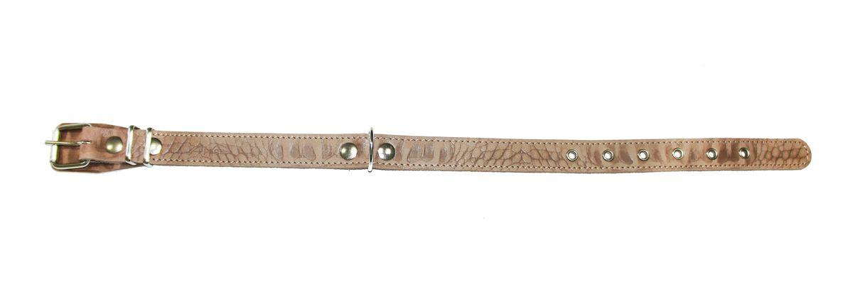 Ошейник для собак Аркон Джунгли, цвет: светло-коричневый, ширина 2,5 см, длина 60 см70-0974Ошейник для собак Аркон Джунгли изготовлен из натуральной кожи, устойчивой к влажности и перепадам температур, и металла. Изделие снабжено металлической петлей для поводка. Ошейник отличается высоким качеством, удобством и универсальностью.Размер регулируется при помощи пряжки, зафиксированной на одном из 6 отверстий. Обхват шеи: 37 - 51 см. Ширина ошейника: 2,5 см.Длина ошейника: 60 см.