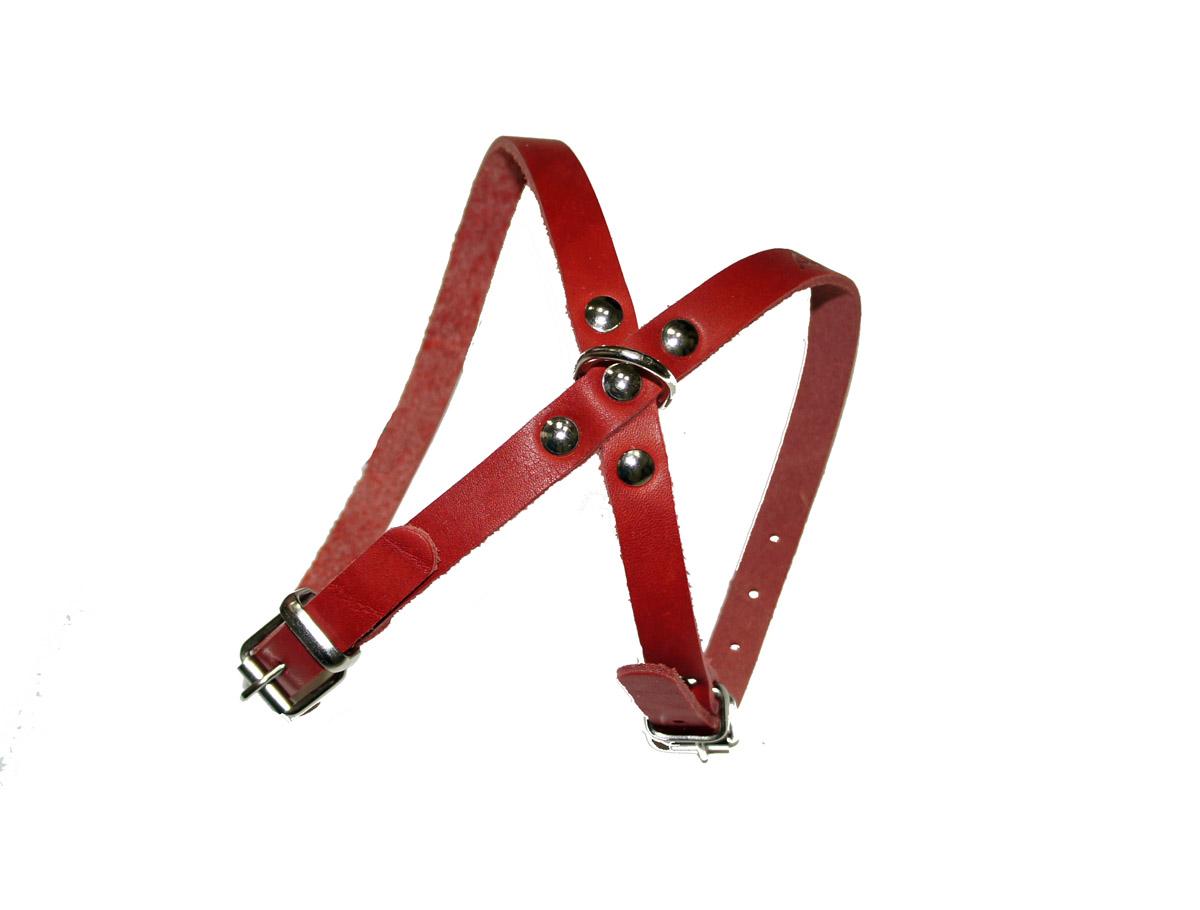 Шлейка для животных Аркон 8, цвет: красный, ширина 1,2 см0120710Шлейка для животных Аркон 8 изготовлена из металла и натуральной кожи. Крепкие металлические элементы делают ее надежной и долговечной. Шлейка - это альтернатива ошейнику. Правильно подобранная шлейка не стесняет движения питомца, не натирает кожу, поэтому животное чувствует себя в ней уверенно и комфортно. Изделие отличается высоким качеством, удобством и универсальностью.Размер регулируется при помощи пряжек, зафиксированных в одном из 6 отверстий. Обхват шеи: 22 - 30 см. Обхват груди: 35 - 43 см. Ширина ремешка: 1,2 см.