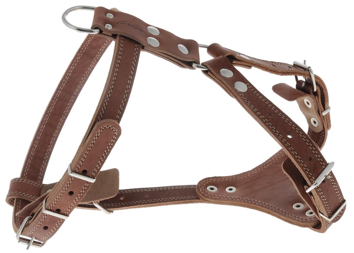 Шлейка водильная Аркон Стандарт №1, цвет: коньячный, ширина 2,5 см0120710Водильная шлейка для собак Аркон Стандарт №1 выполнена из натуральной кожи и металла. Подходит для пород питбуль-терьер, стаффордширский терьер, боксер, миттельшнауцер, эрдельтерьер и других собак. Крепкие металлические элементы делают ее надежной и долговечной. Шлейка - это альтернатива ошейнику. Правильно подобранная шлейка не стесняет движения питомца, не натирает кожу, поэтому животное чувствует себя в ней уверенно и комфортно. Изделие отличается высоким качеством, удобством и универсальностью.Размер регулируется при помощи пряжек, зафиксированных в одном из отверстий.Обхват груди: 63 - 80 см.Длина спинки: 14,5 см. Длина нагрудной лямки: 26 - 35 см. Длина ремня (от лопаток до груди): 19 - 27 см. Ширина ремней: 2,5 см.