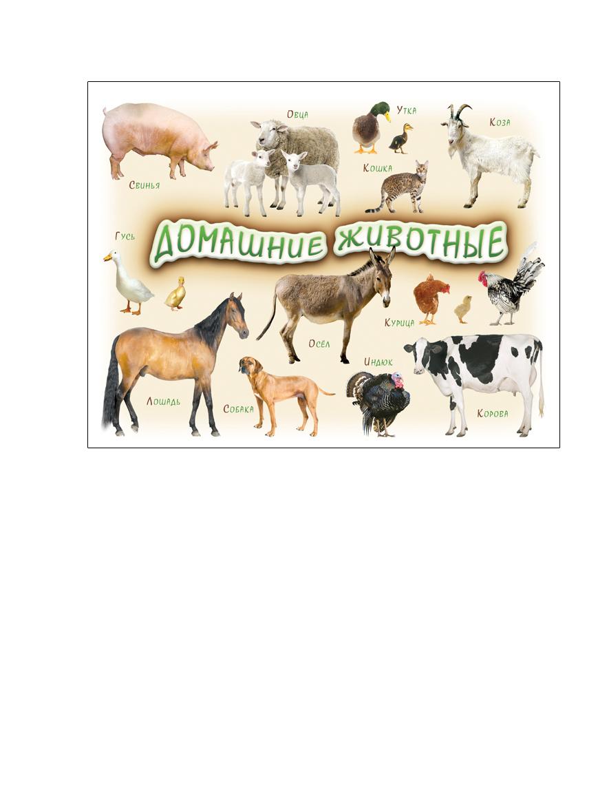 Шпаргалки для мамы Обучающая игра Домашние животные робинс обучающая игра домашние животные