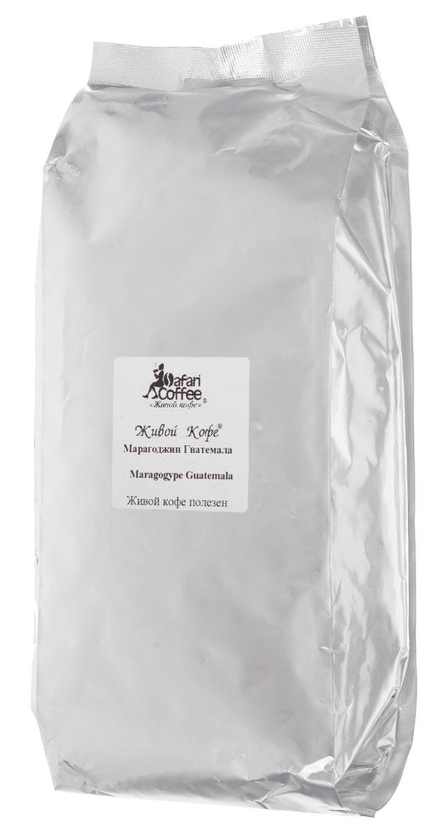 Живой кофе Марагоджип Гватемала кофе в зернах, 1 кг (промышленная упаковка)12115461Сорт Марагоджип – жемчужина кофе. Во-первых, это арабика небывало крупных размеров, во-вторых, напиток обладает достаточно легким вкусом и тонким ароматом, по сравнению с традиционными местными сортами. Марагоджип появился в результате переопыления нескольких видов кофе и скорее является их гибридом. Однако по своим вкусовым качествам он ничуть не уступает другим сортам, а многие его считают даже одним из лучших кофе в мире.Марагоджип Гватемала имеет насыщенный вкус с фруктовыми и цветочными нотками. Послевкусие долгое и мягкое.