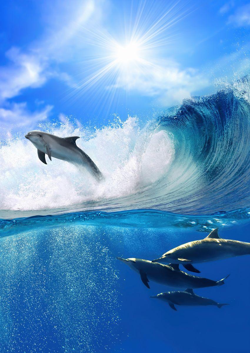 Фотообои Decoretto Игривые дельфины, 180 х 254 смMC-65Фотообои Decoretto Игривые дельфины позволят создать неповторимый облик помещения, в котором они размещены. Фотообои наносятся на стены тем же способом, что и обычные обои. Благодаря превосходной печати и высококачественной флизелиновой основе такие обои будут радовать вас долгое время. Фотообои снова вошли в нашу жизнь, став модным направлением декорирования интерьера. Выбрав правильную фактуру и сюжет изображения можно добиться невероятного эффекта живого присутствия.
