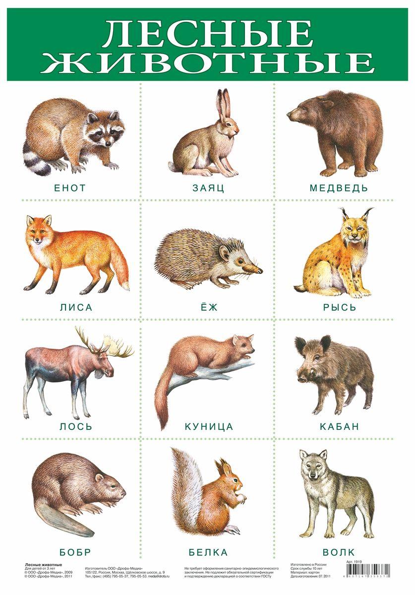 Дрофа-Медиа Обучающий плакат Лесные животные дрофа медиа
