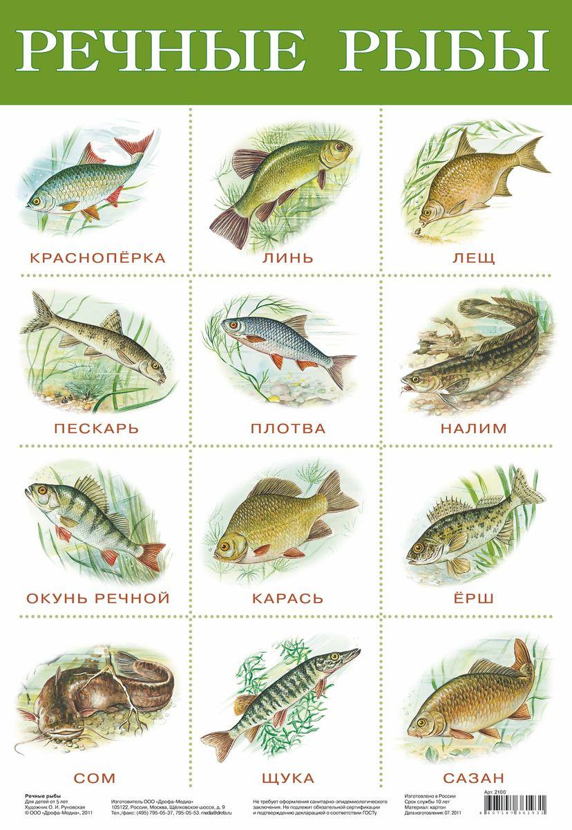 Дрофа-Медиа Обучающий плакат Речные рыбы