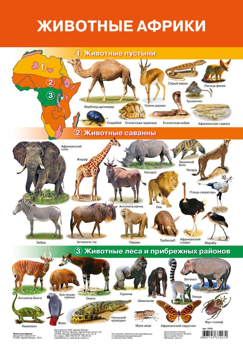 Дрофа-Медиа Обучающий плакат Животные Африки