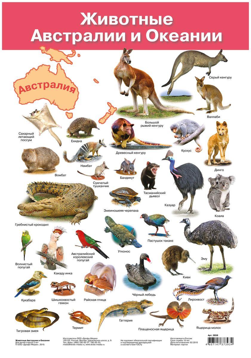 Дрофа-Медиа Обучающий плакат Животные Австралии и Океании