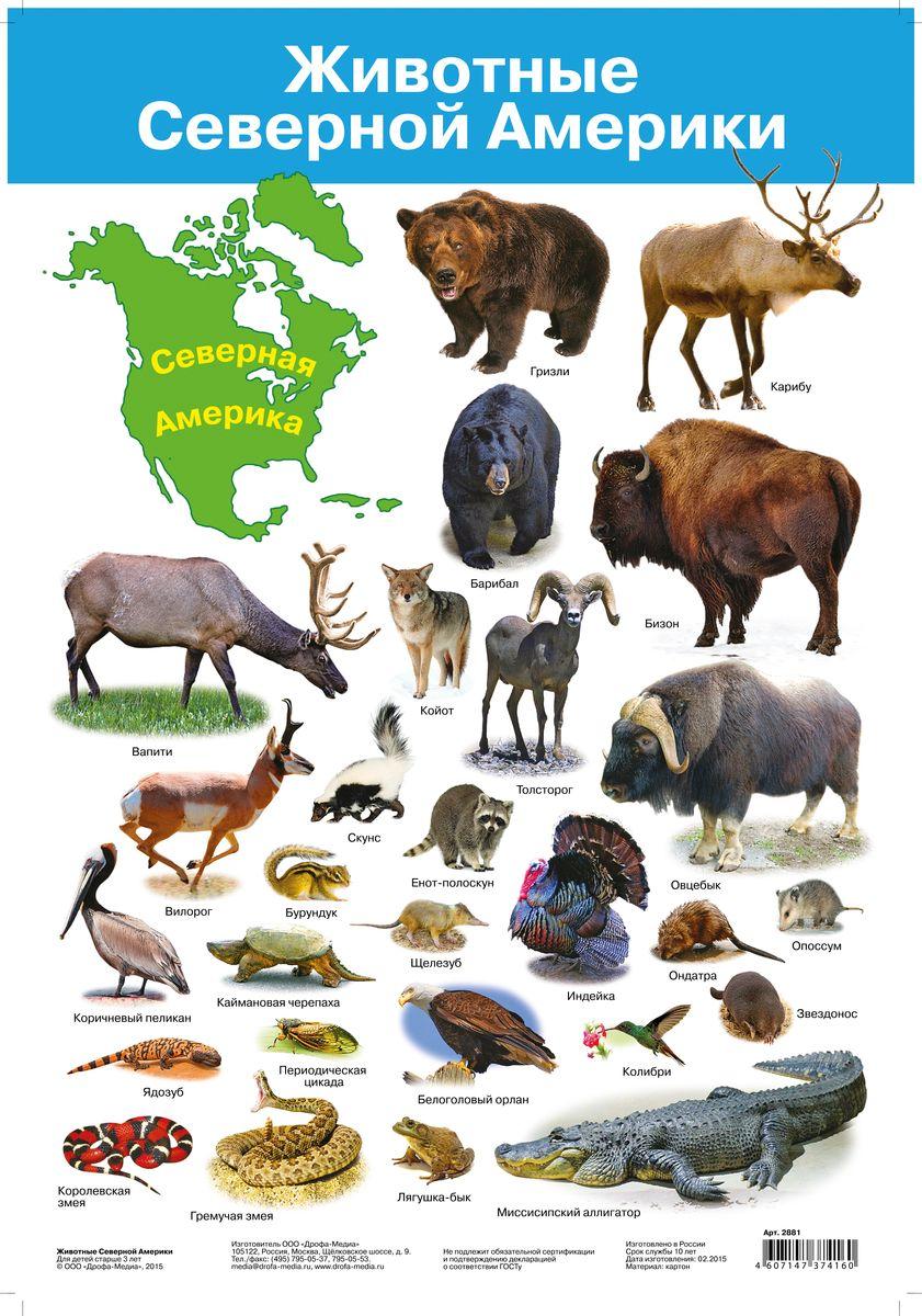 Дрофа-Медиа Обучающий плакат Животные Северной Америки