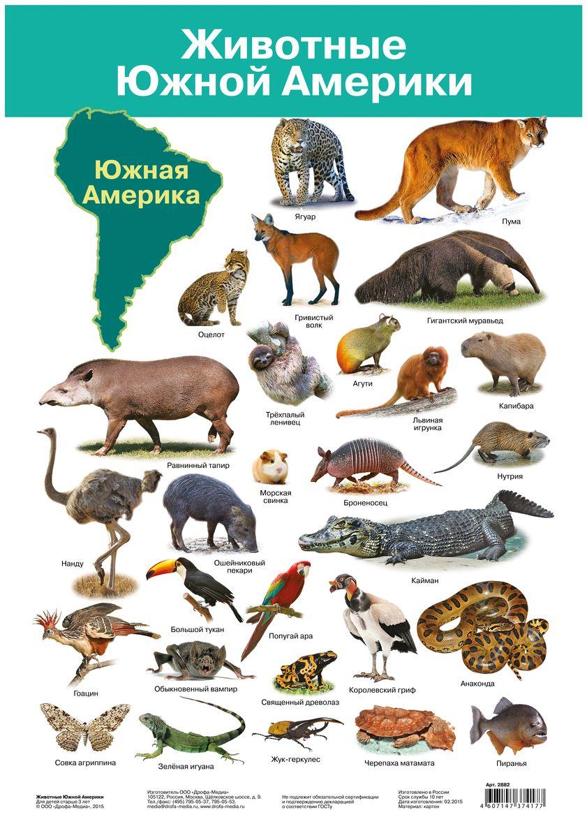 Дрофа-Медиа Обучающий плакат Животные Южной Америки