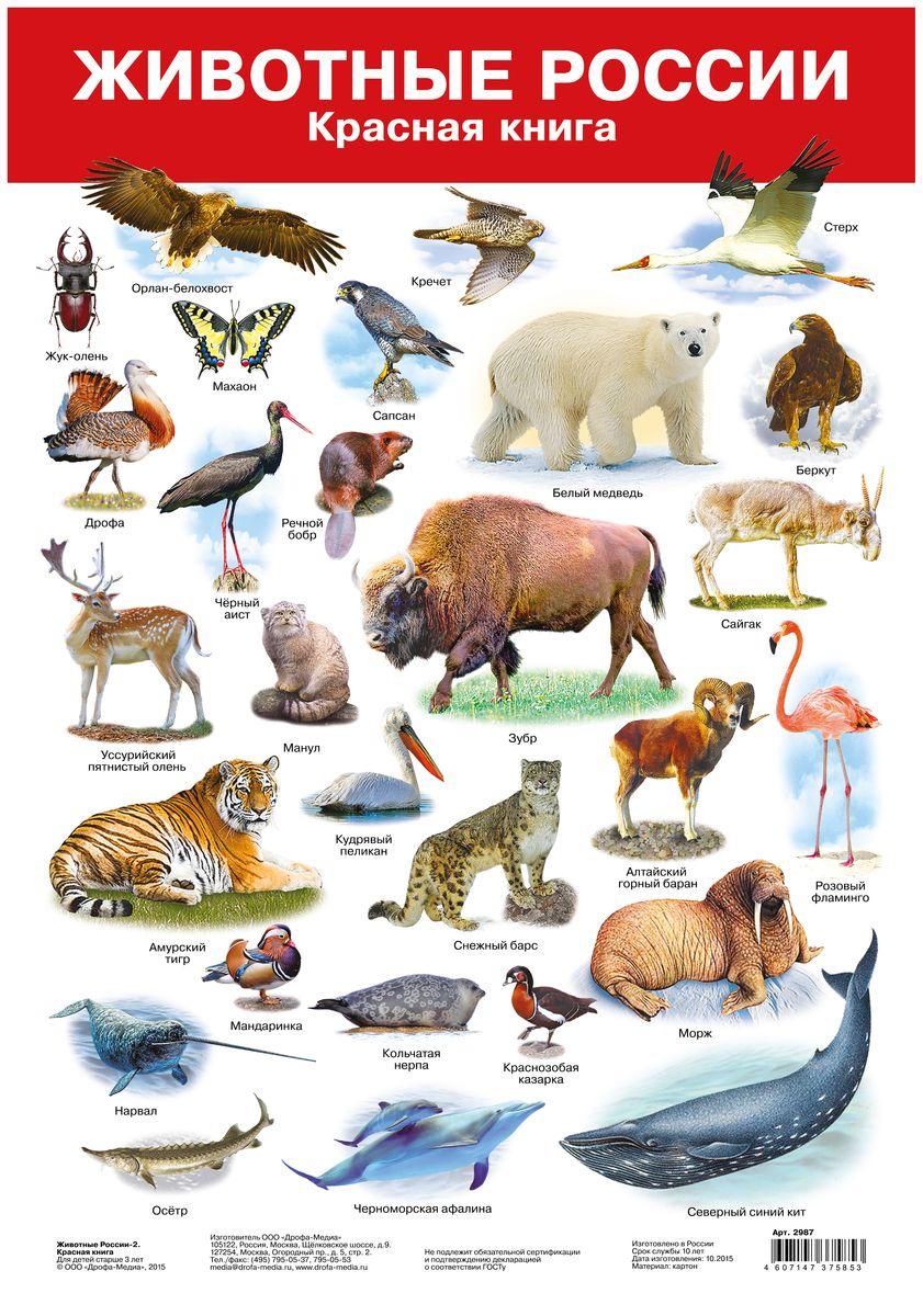 Дрофа-Медиа Обучающий плакат Животные России-2 Красная книга