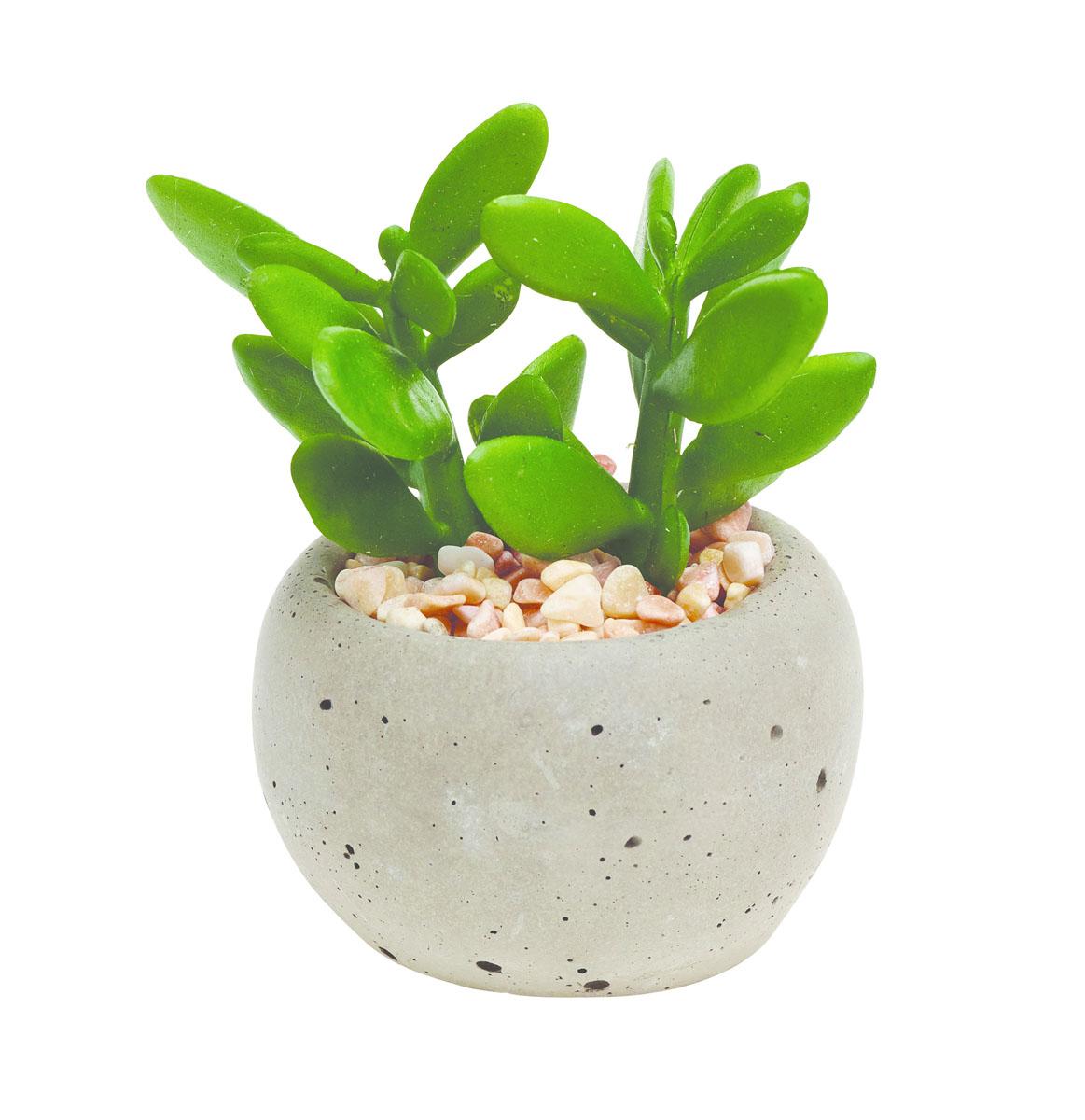 Растение суккулентное Gardman в круглом горшке, 8,5 х 6 см. 02860-102860-1