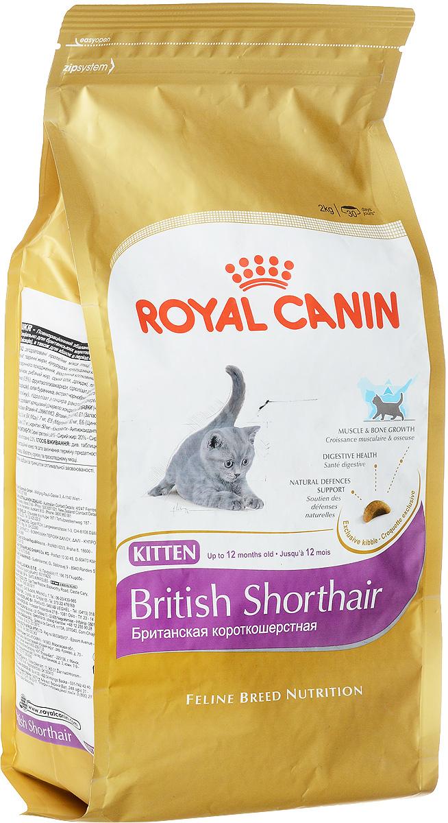 Корм сухой Royal Canin British Shorthair Kitten, для британских короткошерстных котят в возрасте от 4 до 12 месяцев, 2 кг0120710Royal Canin British Shorthair Kitten - полнорационный корм для британских короткошерстных котят в возрасте от 4 до 12 месяцев. Фаза роста - ключевой этап развития котят этой удивительной породы, который определяет их будущее. Крупная и мускулистая, британская короткошерстная кошка уже с самого раннего возраста имеет особые потребности в питании. Сохраняются они и в дальнейшем, позволяя животному оставаться в форме. Очень многое из того, что важно для развития котят-британцев, зависит от корма.Здоровый рост котенка. Здоровье и прочность костей и мышц котенка британской короткошерстной породы существенно зависят от того, как пройдет фаза роста. Вот почему в это время так важен выбор подходящей диеты. Учитывая, что кошки этой породы не слишком подвижны и имеют склонность к полноте, им с самого раннего возраста нужно особое питание, причем в ограниченном объеме.Потребность в очень легко усваиваемом корме. Примерно до 12 месяцев пищеварительная система животного еще не окончательно сформирована. На этом этапе котята-британцы нуждаются в специализированном корме.Высокая нагрузка на иммунную систему. Процесс роста - это процесс изменений и познания мира. Однако иммунная система котенка еще не окрепла. После отъема от кошки ему требуется корм, который поддержит его естественную защиту.Рост костей и мышц. Отличительная особенность британской короткошерстной кошки - мощные кости и мускулы. Продукт British Shorthair Kitten позволяет поддерживать здоровье мускулатуры и скелета благодаря наличию специально обработанных белков и сбалансированному сочетанию минеральных веществ и витаминов. Формула обогащена L-карнитином.Здоровье пищеварительной системы. Продукт помогает поддерживать баланс кишечной флоры и обеспечивает оптимальную переносимость благодаря наличию пребиотиков и белков с высокой усвояемостью L.I.P.Поддержка естественной защиты. Естественная 