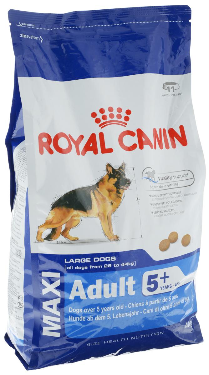 Корм сухой Royal Canin Maxi Adult 5+, для собак весом от 26 кг до 44 кг старше 5 лет, 4 кг0120710Полнорационный сухой корм Royal Canin Maxi Adult 5+ для взрослых собак крупных размеров (вес собаки от 26 до 44 кг) старше 5 лет.Особенности корма:Поддержание жизненной энергии: адаптированное содержание питательных веществ помогает сохранять нормальное функционирование организма у собак крупных пород, проявляющих первые признаки старения. Содержит специальный комплекс антиоксидантов, способствующий нейтрализации свободных радикалов.Поддержка костей и суставов: поддерживает здоровье костей и суставов у собак крупных пород при повышенных нагрузках.Пищевая переносимость: повышенная усваиваемость рациона достигается благодаря особой рецептуре с очень высоким качеством белков и сбалансированным содержанием пищевых волокон.Здоровье зубов: сокращает образование зубного налета благодаря хелатам кальция.Состав: дегидратированные белки животного происхождения (птица), рис, животные жиры, пшеница, кукурузная мука, пшеничная мука, изолят растительных белков, гидролизат белков животного происхождения, кукурузная клейковина, кукуруза, растительная клетчатка, минеральные вещества, свекольный жом, рыбий жир, дрожжи, соевое масло, оболочка и семена подорожника, фруктоолигосахариды, масло огуречника аптечного, экстракт бархатцев прямостоячих (источник лютеина), экстракты зеленого чая и винограда (источники полифенолов), гидролизат из панциря ракообразных (источник глюкозамина), гидролизат из хряща (источник хондроитина).Добавки (в 1 кг): A 22400 МЕ, Витамин D3 1000 МЕ, Железо 46 мг, Йод 4,6 мг, Медь 9 мг, Марганец 59 мг, Цинк 178 мг, Селен 0,1 мг.Содержание питательных веществ: белки 26%, жиры 17%, минеральные вещества 5,8%, клетчатка пищевая 2,5%, медь 15 мг/кг.Товар сертифицирован.