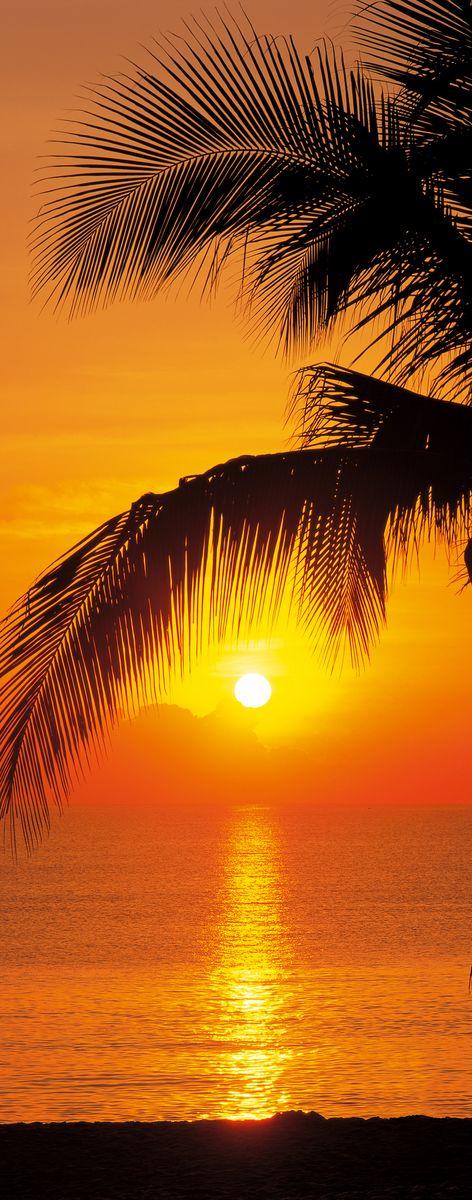 Фотообои Komar Пальмы. Пляж. Восход, 0,92 х 2,2 м8-972Бумажные фотообои известного бренда Komar позволят создать неповторимый облик помещения, в котором они размещены. Фотообои наносятся на стены тем же способом, что и обычные обои. Благодаря превосходной печати и высококачественной основе такие обои будут радовать вас долгое время. Фотообои снова вошли в нашу жизнь, став модным направлением декорирования интерьера. Выбрав правильную фактуру и сюжет изображения можно добиться невероятного эффекта живого присутствия.Ширина рулона: 92 см.Высота полотна: 2,2 м. Клей в комплекте.