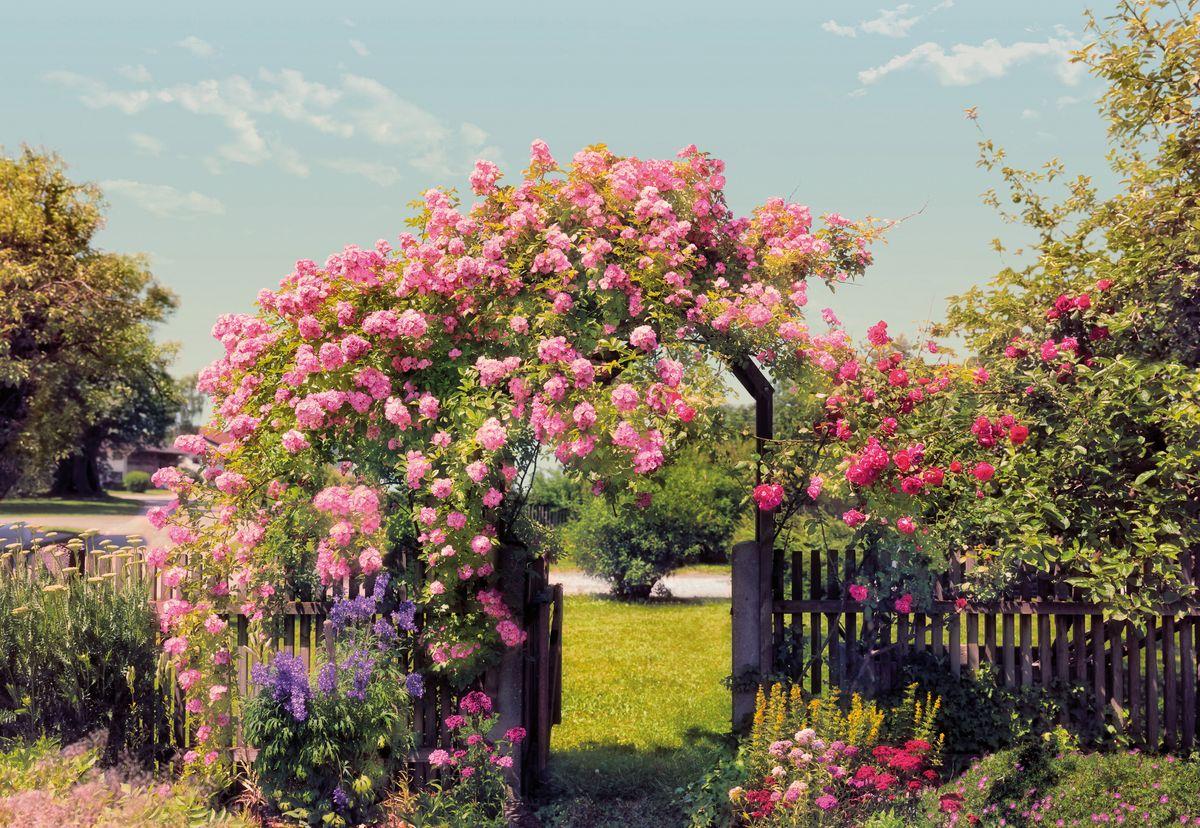 Фотообои Komar Розовый сад, 3,68 х 2,54 мCV 4017 ДекорБумажные фотообои известного бренда Komar позволят создать неповторимый облик помещения, в котором они размещены. Фотообои наносятся на стены тем же способом, что и обычные обои. Благодаря превосходной печати и высококачественной основе такие обои будут радовать вас долгое время. Фотообои снова вошли в нашу жизнь, став модным направлением декорирования интерьера. Выбрав правильную фактуру и сюжет изображения можно добиться невероятного эффекта живого присутствия.Ширина рулона: 3,68 м.Высота полотна: 2,54 м. Клей в комплекте.