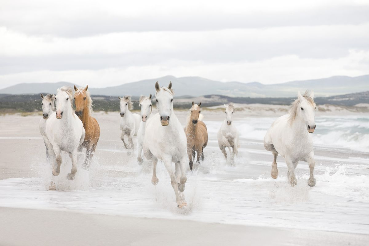 Фотообои Komar Белые лошади, 3,68 х 2,54 мПКПШФБумажные фотообои известного бренда Komar позволят создать неповторимый облик помещения, в котором они размещены. Фотообои наносятся на стены тем же способом, что и обычные обои. Благодаря превосходной печати и высококачественной основе такие обои будут радовать вас долгое время. Фотообои снова вошли в нашу жизнь, став модным направлением декорирования интерьера. Выбрав правильную фактуру и сюжет изображения можно добиться невероятного эффекта живого присутствия.Ширина рулона: 3,68 м.Высота полотна: 2,54 м. Клей в комплекте.