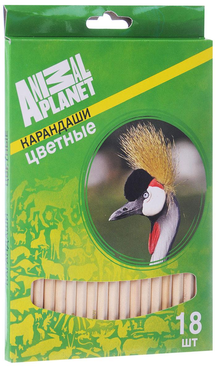 Action! Набор цветных карандашей Animal Planet Птицы 18 цветов2010440Цветные карандаши Action Animal Planet. Птицы откроют юным художникам новые горизонты для творчества, а также помогут отлично развить мелкую моторику рук, цветовое восприятие, фантазию и воображение. Традиционный шестигранный корпус изготовлен из натуральной древесины светлого цвета. Карандаши удобно держать в руках, а мягкий грифель не требует сильного нажима. Комплект включает 18 заточенных карандашей ярких насыщенных цветов.