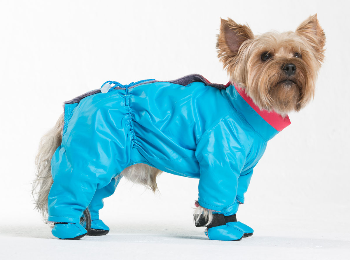 """Комбинезон для собак Yoriki """"Флирт"""", для мальчика, цвет: голубой. Размер L"""