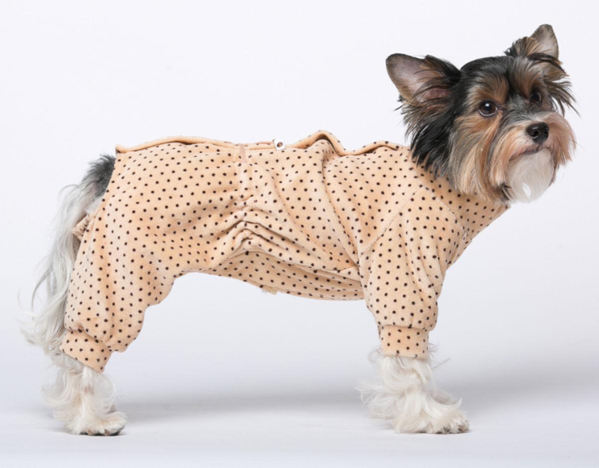 Комбинезон для собак Yoriki Веснушки, для мальчика, цвет: бежевый. Размер SDM-140537_оранжевыйВелюровый комбинезон для собак Yoriki Веснушки отлично подойдет для прогулок в прохладную погоду. Застегивается комбинезон на спине на кнопки и дополнительно затягивается на талии шнурком. Благодаря такому комбинезону вашему питомцу будет комфортно наслаждаться прогулкой.Обхват шеи: 20-24 см.Длина по спинке: 21 см.Объем груди: 29-36 см.