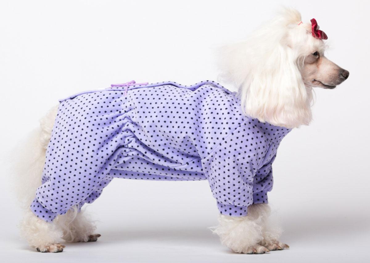 Комбинезон для собак Yoriki Веснушки, для девочки, цвет: сиреневый. Размер SDM-160321Велюровый комбинезон для собак Yoriki Веснушки отлично подойдет для прогулок в прохладную погоду. Застегивается комбинезон на спине на кнопки и дополнительно затягивается на талии шнурком. Благодаря такому комбинезону вашему питомцу будет комфортно наслаждаться прогулкой.Обхват шеи: 20-24 см.Длина по спинке: 21 см.Объем груди: 29-36 см.