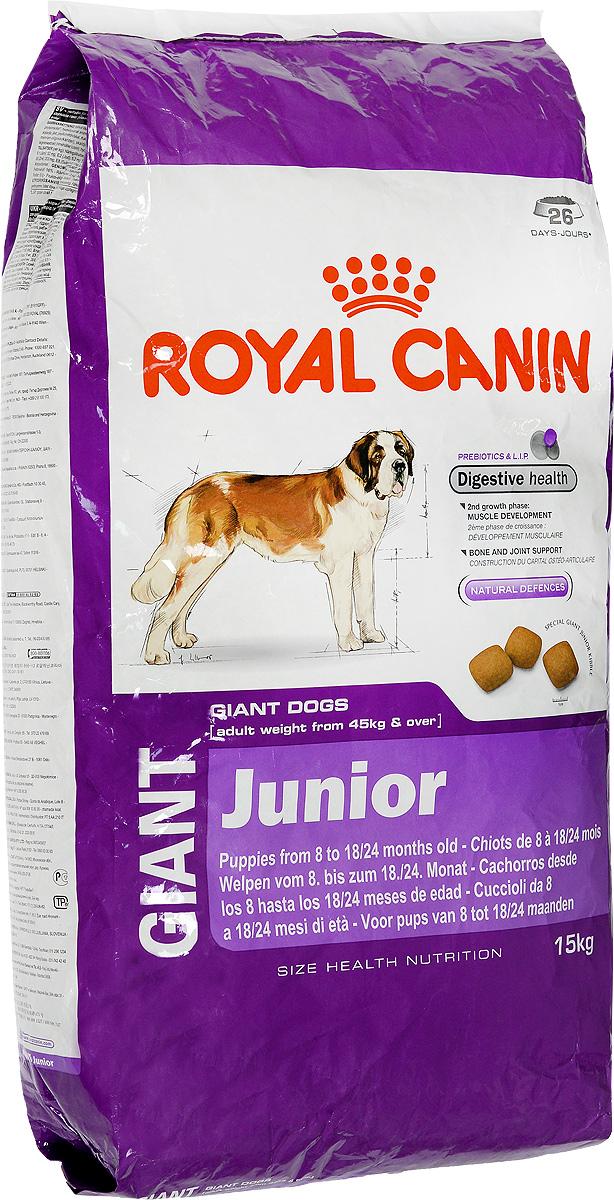 Корм сухой Royal Canin Giant Junior, для щенков собак очень крупных размеров, 15 кг6721Корм сухой Royal Canin Giant Junior - полнорационный сухой корм для щенков собак очень крупных размеров (вес взрослой собаки более 45 кг) в возрасте с 8 до 18/24 месяцев. Максимальная пищевая переносимость.Формула с содержанием высококачественных белков L.I.P, а также пребиотиков - фруктоолигосахаридов и маннановых олигосахаридов оказывает благоприятное воздействие на пищеварительную систему и поддерживает оптимальную консистенцию стула. Вторая фаза роста: развитие мышечной массы.Оптимальное количество белка и L-карнитина обеспечивают набор мышечной массы щенков собак очень крупных размеров во второй фазе роста (с 8 месяцев). Здоровье костей и суставов.Формула с оптимальным уровнем энергии и минералов (кальция и фосфора) способствует поддержанию костей и суставов щенков собак очень крупных размеров в период роста.Естественные механизмы защиты.Способствует поддержанию естественных защитных сил организма щенка благодаря запатентованному комплексу антиоксидантов и манноолигосахаридов. Товар сертифицирован.