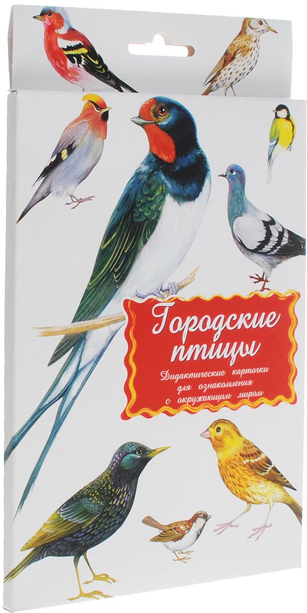 Маленький гений-Пресс Обучающие карточки Городские птицы маленький гений пресс обучающие карточки головные уборы обувь