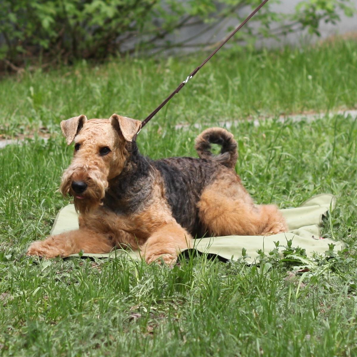 Коврик для собак Osso Fashion, охлаждающий, цвет: оливковый, 75 х 100 смО-1017Охлаждающий коврик Osso Fashion из ткани ССТ (COOL COMFORT TECHNOLOGY) помогает собакам легче переносить жару, делает более комфортным их пребывание в душной квартире, в транспорте и на выставках.Охлаждающий коврик можно постелить на пол или на лежанку, где собаке будет комфортно проводить время жарким летним днем. Также его можно использовать как покрывало, которое защитит от жары и вас, и вашего питомца. Охлаждающее изделие Osso Fashion сшиты из инновационной ткани ССТ (COOL COMFORT TECHNOLOGY), которая создает персональную зону охлаждения и обеспечивает комфортную терморегуляцию на длительное время. Охлаждение ткани обеспечивается за счет уникальной структуры переплетения волокон, создающих капиллярные сети повышенной плотности. Серебросодержащее волокно X-Static, входящее в состав ткани, придает ей антистатические и антимикробные свойства. Длительное использование и многократные стирки не влияют на охлаждающие свойства ткани. В отличие от охлаждающих тканей предыдущего поколения, эта ткань не имеет химической пропитки и не содержит охлаждающих гелей.При активации изделия (встряхивании) происходит максимальное охлаждение за счет испарения воды. Однако – из-за уникальной комбинации волокон и их взаимодействия между собой – испарение и потеря влаги происходит медленно, поскольку одновременно идет мощное впитывание паров и водоотведение.Чтобы активировать охлаждающее действие изделия его нужно намочить, отжать и встряхнуть. Подходит вода из любого источника: из-под крана, дождевая, речная, морская, влага от потоотделения - они реактивируют охлаждающую функцию снова и снова.Охлаждающая подстилка для собак Osso Fashion подходит для маленьких, больших и средних собак.Размер коврика: 75 х 100 см.