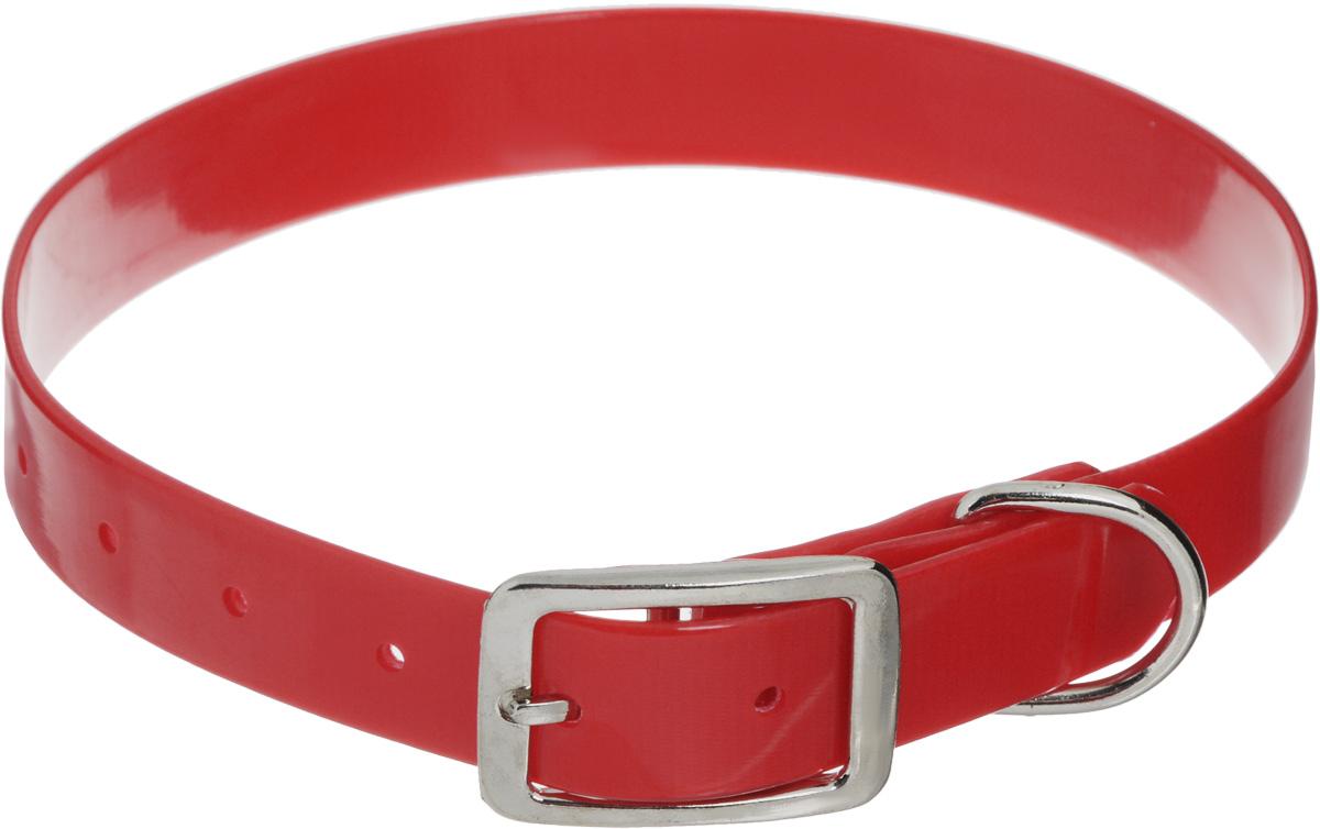 Ошейник для собак Каскад Синтетик, цвет: красный, ширина 2,5 см, обхват шеи 44-56,5 смJB-2003_голубойОшейник для собак Каскад Синтетик изготовлен из высокотехнологичного биотана (нейлон, термопластичный полиуретан). Сверхпрочный ошейник удобен и практичен в использовании, не выгорает, устойчив к влажности, не рвется и не деформируется. Размер ошейника регулируется с помощью металлической пряжки, которая фиксируется на одном из 6 отверстий изделия. Яркий ошейник Каскад Синтетик идеально подойдет для активных собак, для прогулок на природе и охоты.Минимальный обхват шеи: 44 см. Максимальный обхват шеи: 56,5 см. Ширина: 2,5 см.