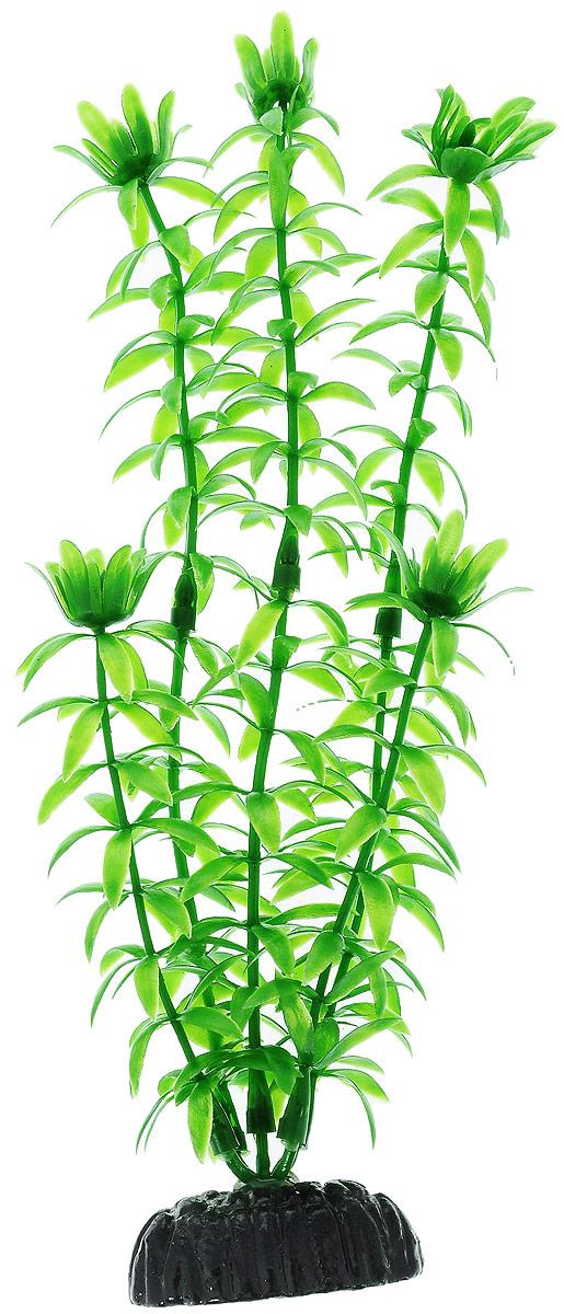 Растение для аквариума Barbus Элодея, пластиковое, высота 20 смAccessory 045Растение для аквариума Barbus Элодея, выполненное из качественного пластика, станет прекрасным украшением вашего аквариума. Пластиковое растение идеально подходит для дизайна всех видов аквариумов. Оно абсолютно безопасно, нейтрально к водному балансу, устойчиво к истиранию краски, подходит как для пресноводного, так и для морского аквариума. Растение для аквариума Barbus поможет вам смоделировать потрясающий пейзаж на дне вашего аквариума или террариума. Высота растения: 20 см.