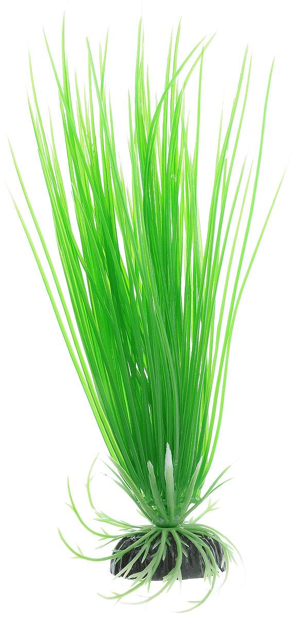 Растение для аквариума Barbus Акорус, пластиковое, высота 20 см0120710Растение для аквариума Barbus Акорус, выполненное из качественного пластика, станет оригинальным украшением вашего аквариума. Пластиковое растение идеально подходит для дизайна всех видов аквариумов. Оно абсолютно безопасно, не токсично, нейтрально к водному балансу, устойчиво к истиранию краски, подходит как для пресноводного, так и для морского аквариума. Растение для аквариума Barbus поможет вам смоделировать потрясающий пейзаж на дне вашего аквариума или террариума. Высота растения: 20 см.