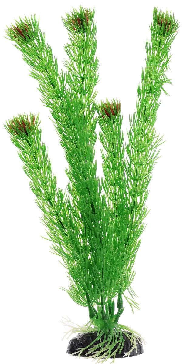 Растение для аквариума Barbus Амбулия, пластиковое, высота 30 см12171996Растение для аквариума Barbus Амбулия, выполненное из качественного пластика, станет прекрасным украшением вашего аквариума. Пластиковое растение идеально подходит для дизайна всех видов аквариумов. Оно абсолютно безопасно, нейтрально к водному балансу, устойчиво к истиранию краски, подходит как для пресноводного, так и для морского аквариума. Растение для аквариума Barbus поможет вам смоделировать потрясающий пейзаж на дне вашего аквариума или террариума. Высота растения: 30 см.