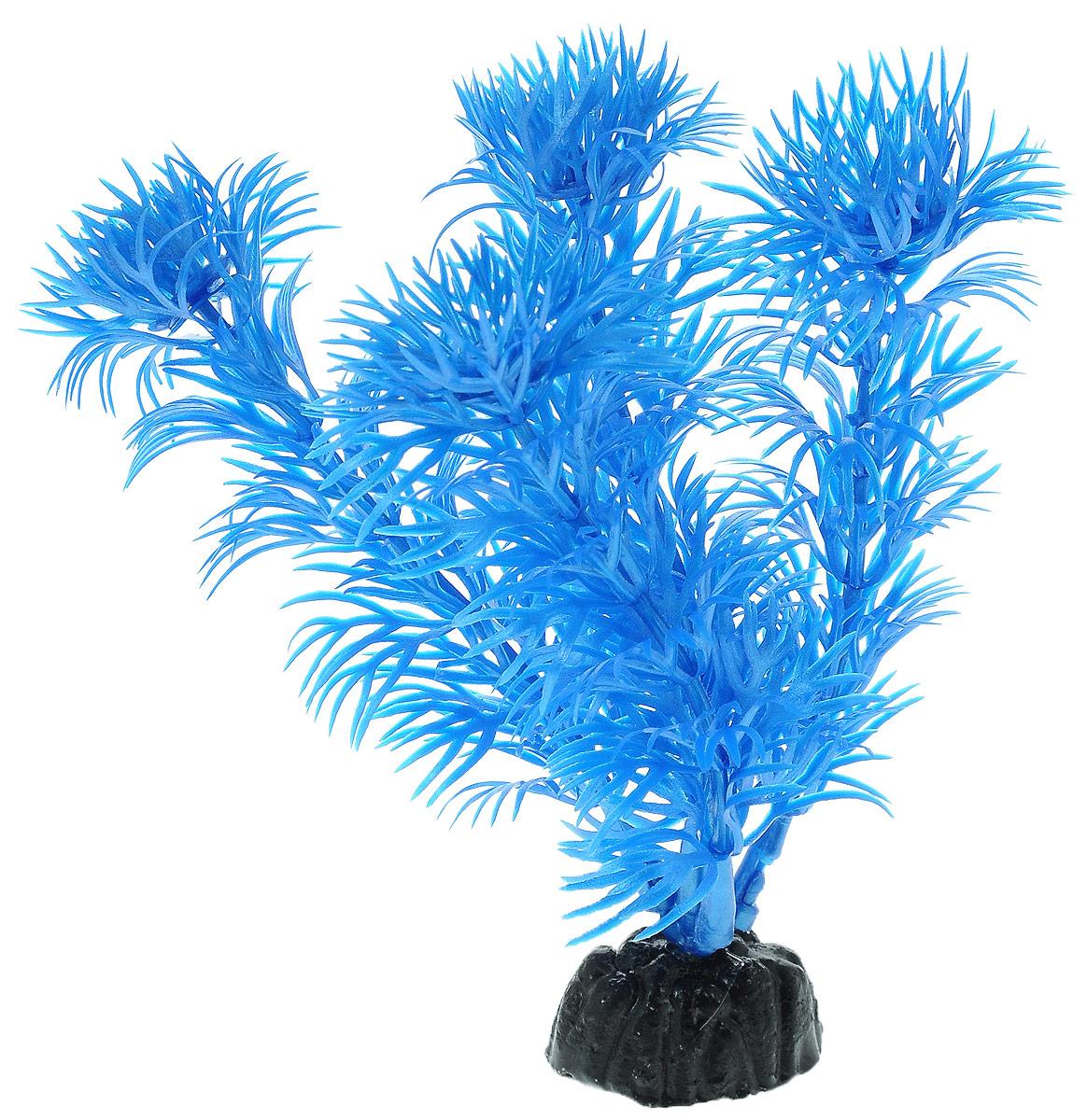 Растение для аквариума Barbus Кабомба, пластиковое, цвет: синий, высота 10 см0120710Растение Barbus Кабомба, выполненное из высококачественного нетоксичного пластика, станет оригинальным украшением вашего аквариума. Пластиковое растение идеально подходит для дизайна всех видов аквариумов. В воде происходит абсолютная имитация живых растений. Изделие не требует дополнительного ухода и просто в применении. Оно абсолютно безопасно, нейтрально к водному балансу, устойчиво к истиранию краски, подходит как для пресноводного, так и для морского аквариума. Растение для аквариума Barbus Кабомба поможет вам смоделировать потрясающий пейзаж на дне вашего аквариума.Высота растения: 10 см.