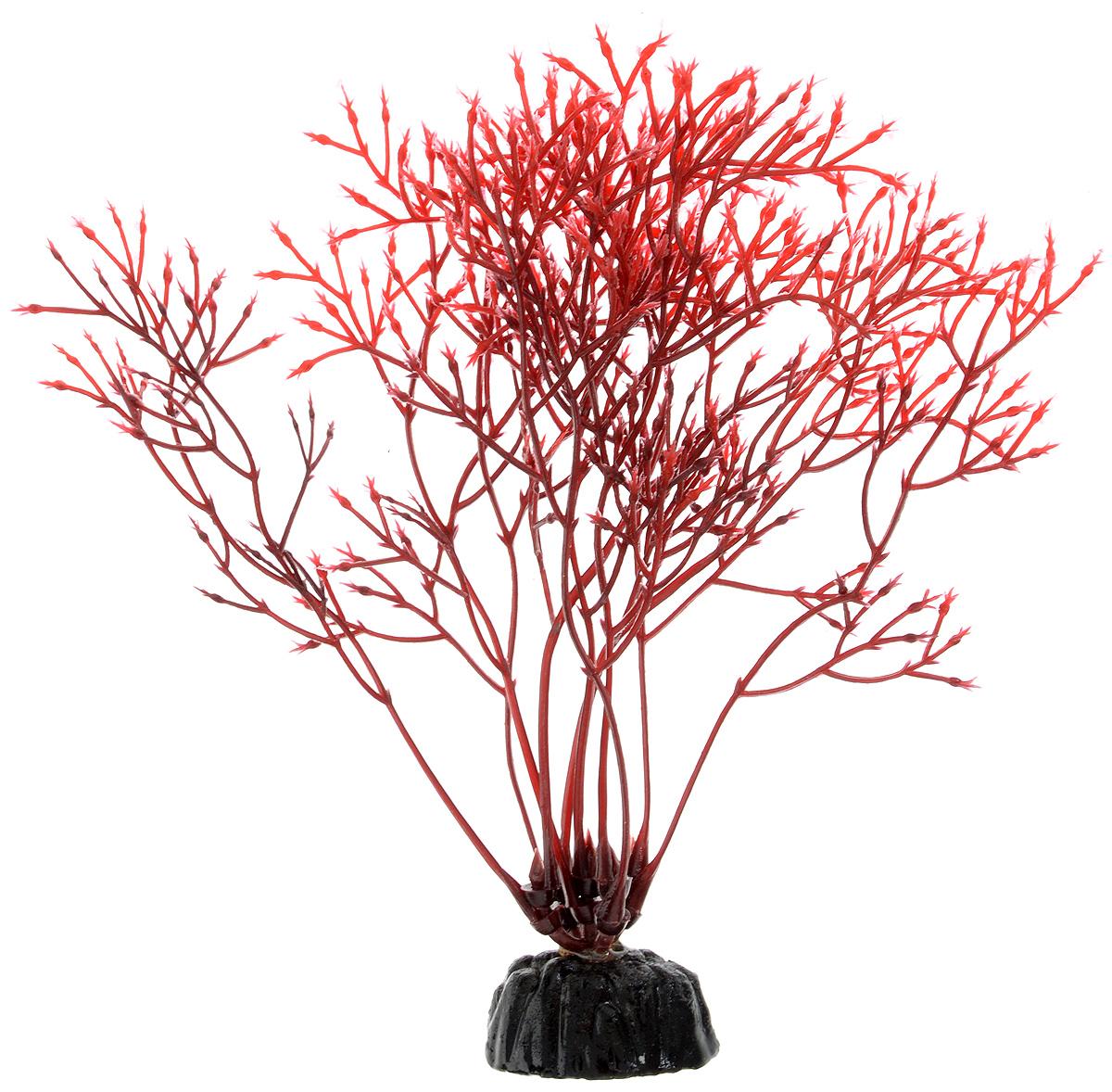 Растение для аквариума Barbus Горгонария, пластиковое, цвет: красный, высота 10 см0120710Растение для аквариума Barbus Горгонария, выполненное из качественного пластика, станет оригинальным украшением вашего аквариума. Пластиковое растение идеально подходит для дизайна всех видов аквариумов. Оно абсолютно безопасно, не токсично, нейтрально к водному балансу, устойчиво к истиранию краски, подходит как для пресноводного, так и для морского аквариума. Растение для аквариума Barbus поможет вам смоделировать потрясающий пейзаж на дне вашего аквариума или террариума. Высота растения: 10 см.