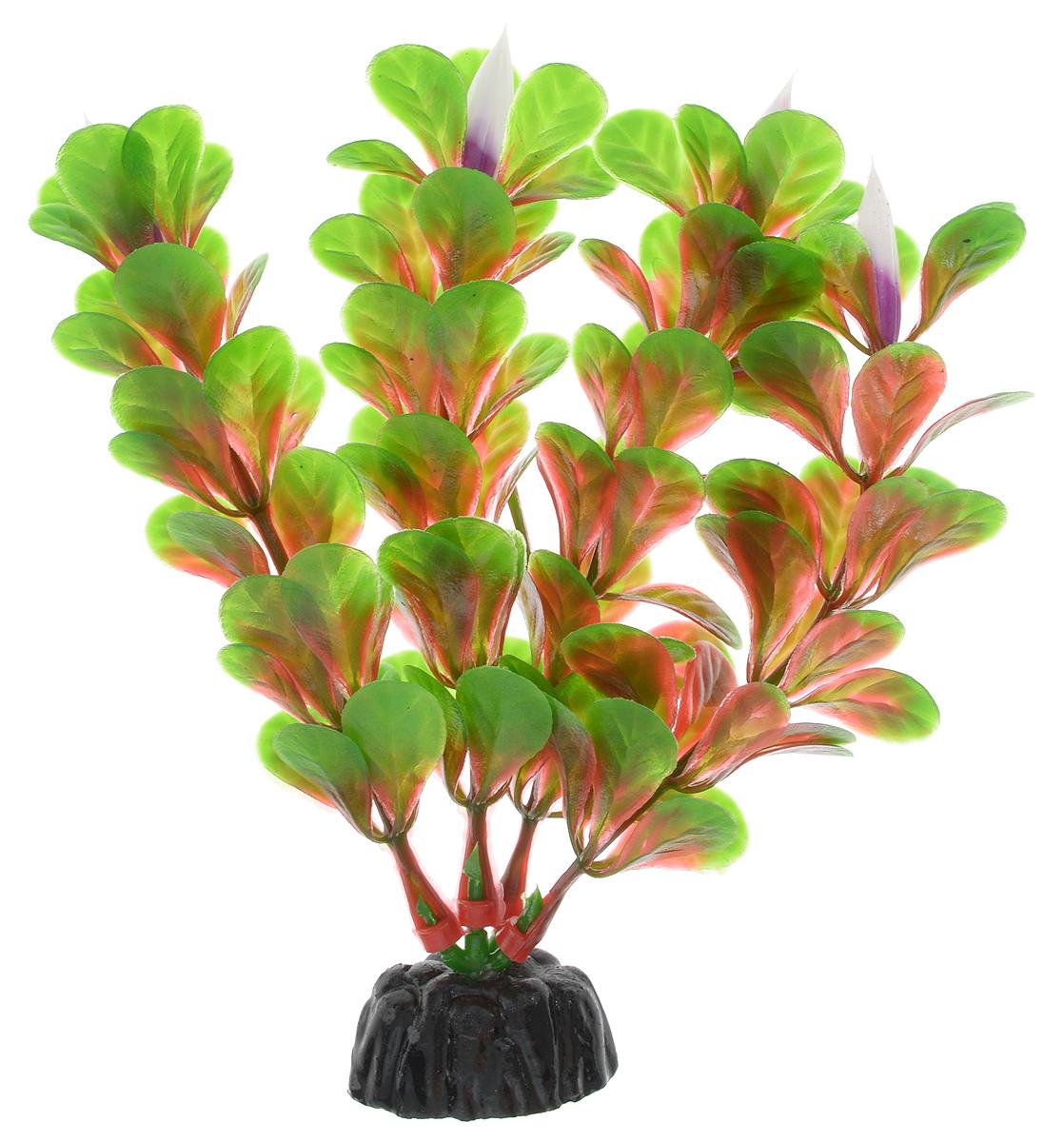 Растение для аквариума Barbus Людвигия ползучая (красная), пластиковое, высота 10 смAccessory 020Растение для аквариума Barbus Людвигия ползучая (красная), выполненное из качественного пластика, станет оригинальным украшением вашего аквариума. Пластиковое растение идеально подходит для дизайна всех видов аквариумов. Оно абсолютно безопасно, не токсично, нейтрально к водному балансу, устойчиво к истиранию краски, подходит как для пресноводного, так и для морского аквариума. Растение для аквариума Barbus поможет вам смоделировать потрясающий пейзаж на дне вашего аквариума или террариума. Высота растения: 10 см.