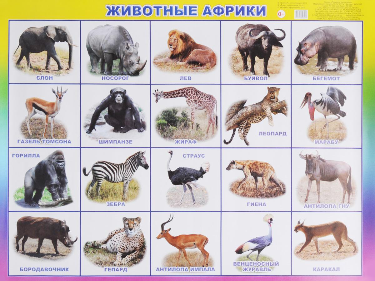 Алфея Обучающий плакат Животные Африки ламинатор fellowes lunar fs 57427 fs 57427