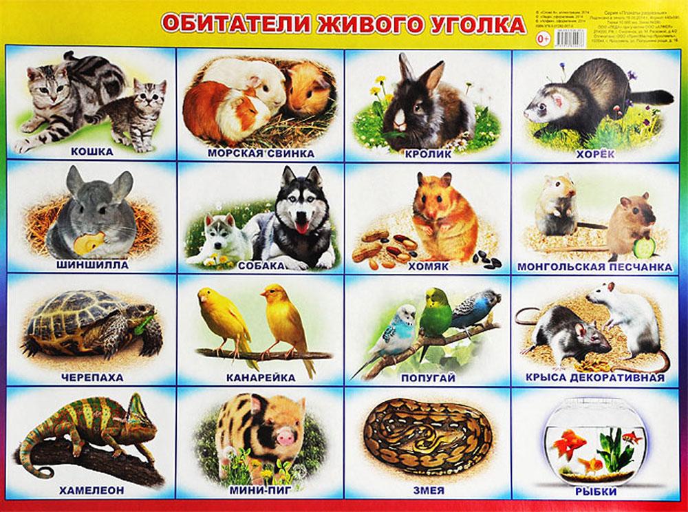Алфея Обучающий плакат Кто где живет?
