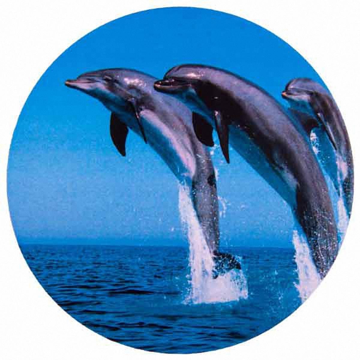 Чехол на запасное колесо Skyway Дельфины, диаметр 67 смВетерок 2ГФЧехол Skyway Дельфины обеспечивает защиту запасного колеса автомобиля от загрязнений, прямых солнечных лучей, воздействия воды, посторонних предметов, агрессивных сред и других негативных факторов. Чехол изготовлен из прочной экокожи, которая легко моется и надолго сохраняет внешний вид. Чехол оформлен оригинальным изображением дельфинов и снабжен резинкой для легкого надевания. Благодаря чехлу, колесо сохранит свой внешний вид и характеристики. Размер колеса: R15.Диаметр чехла: 67 см.