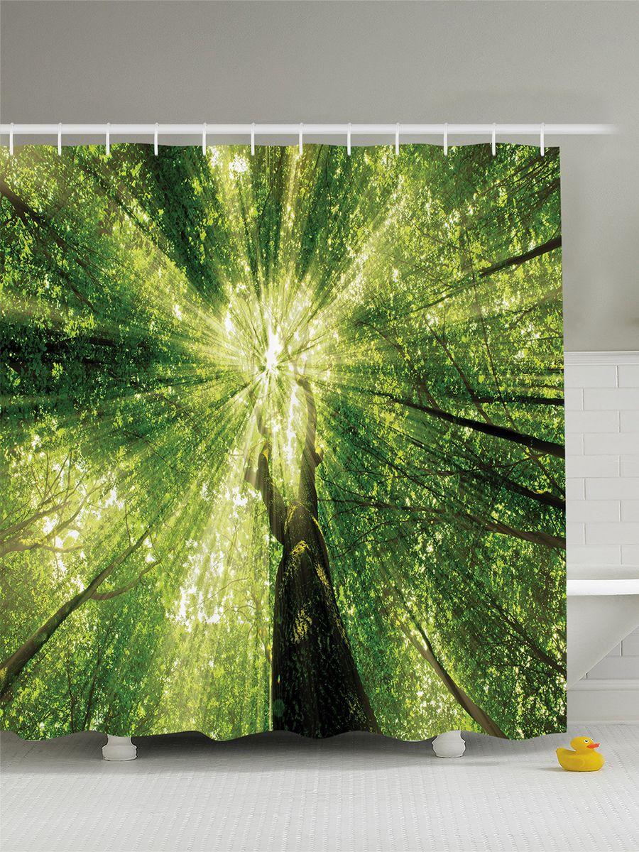 Штора для ванной комнаты Magic Lady Свет сквозь высокие кроны, 180 х 200 см391602Штора Magic Lady Свет сквозь высокие кроны, изготовленная из высококачественного сатена (полиэстер 100%), отлично дополнит любой интерьер ванной комнаты. При изготовлении используются специальные гипоаллергенные чернила для прямой печати по ткани, безопасные для человека.В комплекте: 1 штора, 12 крючков. Обращаем ваше внимание, фактический цвет изделия может незначительно отличаться от представленного на фото.