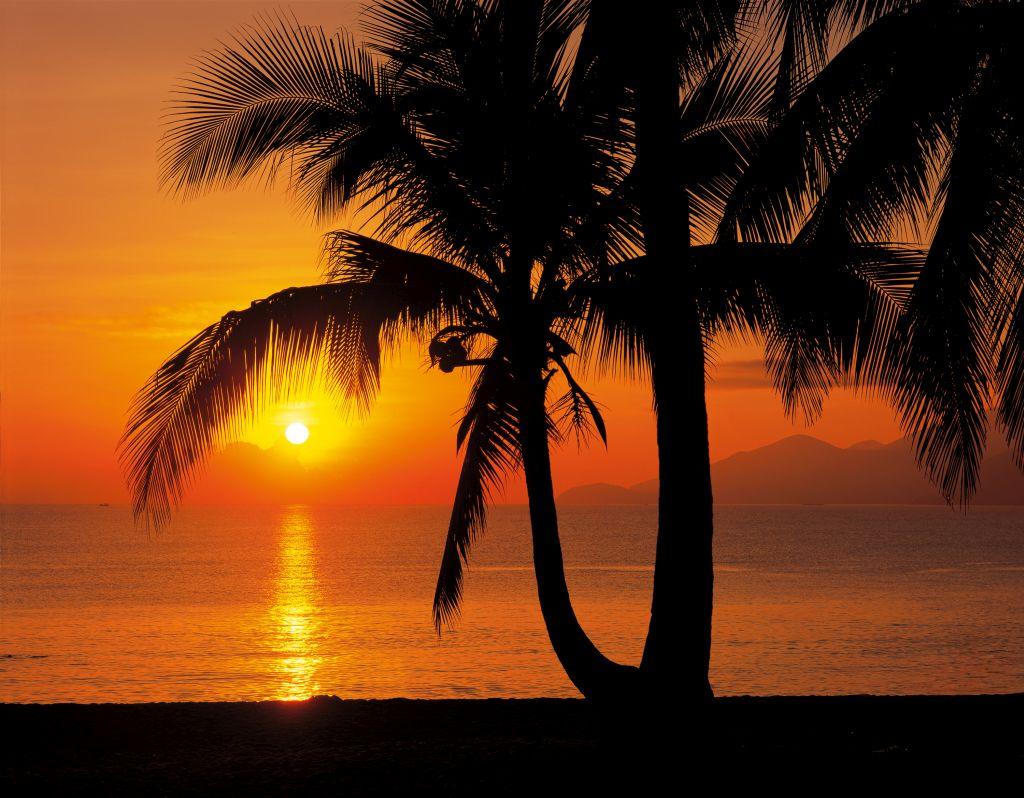 Фотообои Komar Восход солнца на пляже, 3,68 х 2,54 м0413-15-22Бумажные фотообои известного бренда Komar с панорамным видом позволят создать неповторимый облик помещения, в котором они размещены. Фотообои наносятся на стены тем же способом, что и обычные обои. Благодаря превосходной печати и высококачественной основе такие обои будут радовать вас долгое время. Фотообои снова вошли в нашу жизнь, став модным направлением декорирования интерьера. Выбрав правильную фактуру и сюжет изображения можно добиться невероятного эффекта живого присутствия.Ширина рулона: 3,68 м.Высота полотна: 2,54 м. Клей в комплекте.