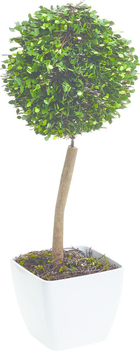 Растение искусственное Gardman Шар, со светодиодами, 38 смK100Растение, освещенное 10 светодиодами, можно расположить как внутри, так и снаружи помещения. Растение оснащено таймером: автоматическое включение на 6 часов -выключение на 18 часов. Работает от 3 батареек АА ( в комплект не включены)