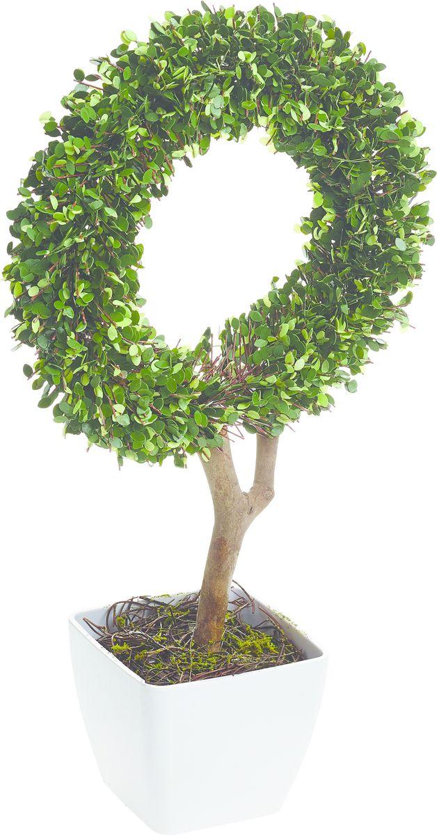 Растение искусственное Gardman Кольцо, со светодиодами, 45 смNLED-454-9W-BKРастение, освещенное 10 светодиодами, можно расположить как внутри, так и снаружи помещения. Растение оснащено таймером: автоматическое включение на 6 часов -выключение на 18 часов. Работает от 3 батареек АА ( в комплект не включены)