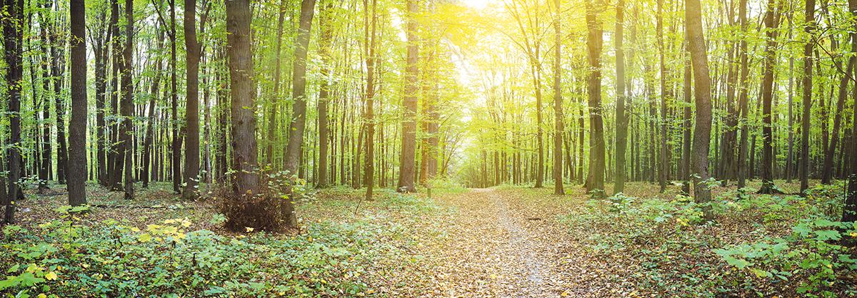 Картина Postermarket Солнечный лес, 33 х 95 смAG 33-04Картина Postermarket Солнечный лес прекрасно подойдет для декора интерьера различных помещений. Постер представляет собой изображение леса, выполненное в технике фотопечать. Картина для интерьера (постер) - это современное и актуальное направление в дизайне помещений. Ее можно использовать для оформления любых помещений (дом, квартира, офис, бар, кафе, ресторан или гостиница). работоспособность. Правильное оформление интерьера создает благоприятный психологический климат, улучшает настроение и мотивирует.Размер картины: 330 x 950 мм.