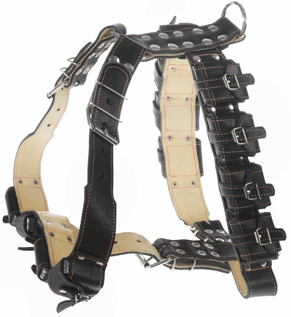 Шлея для собак CoLLaR, с утяжелителями, цвет: черный, бежевый, ширина 4,5 см, обхват груди 92-100 смDM-160131-1Шлея CoLLaR, выполненная из натуральной кожи, оснащена утяжелителями и может использоваться при выгуле или дрессировке бойцовых и служебных собак крупных пород при нехватке нагрузки и недостаточной мышечной массе. Нагрузку можно регулировать путем изъятия грузиков из расстегивающихся карманов.Крепкие металлические элементы делают ее надежной и долговечной. Размер регулируется при помощи пряжки. Шлея для собак CoLLaR отличается высоким качеством, удобством и универсальностью.Обхват груди: 92-100 см.Обхват шеи: 76-91 см.Ширина шлеи: 4,5 см.Количество грузиков: 12.Вес грузика: 450 г.