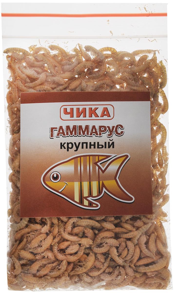 Корм для рыб Чика Гаммарус, крупный, 85 мл. 46070450602710120710Корм для рыб Чика Гаммарус - изготовлен методом сублимированной сушки пресноводных рачков-бокоплавов. Корм быстро поглощает воду и приобретает свойства, близкие к естественным. Гаммарус считается одним из лучших кормов, благодаря своей высокой питательной ценности (более 52% белков), большому содержанию каротина (витамина А и его провитаминов) для яркой окраски и хитина. Он с удовольствием поедается средними и крупными рыбами, а также водоплавающими, птицами, рептилиями и грызунами. Гаммарус способствует очистке пищеварительной системы. Не забывайте удалять несъеденные остатки корма.Остатки корма нужно удалить.Товар сертифицирован.