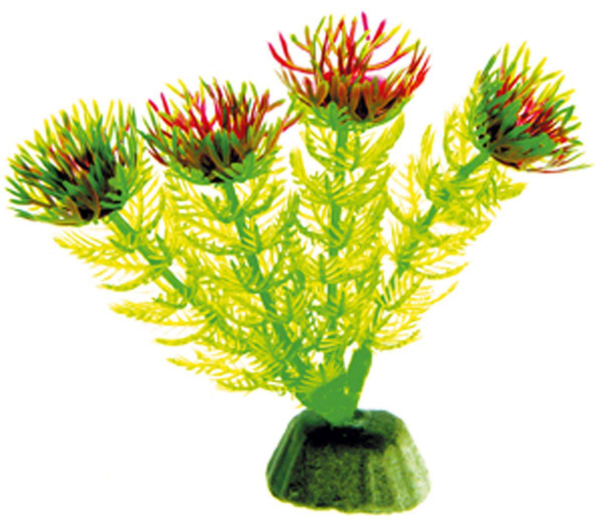 Искусственное растение для аквариума Dezzie, 10 см. 56020020120710Подводное искусственное растение для аквариума Dezzie является неотъемлемой частью композиции аквариума, радует глаз, а также может быть уютным убежищем для рыб и других обитателей аквариума. Пластиковое растение имеет устойчивое дно, которое не нуждается в дополнительном утяжелении и легко устанавливается в грунт. Растение очень практично в использовании, имеет стойкую к воздействию воды окраску и не требует обременительного ухода. Его можно легко достать и протереть тряпкой во время уборки аквариума. Растения из пластика создадут неповторимый дизайн пресноводного или морского аквариума.Высота растения: 10 см.