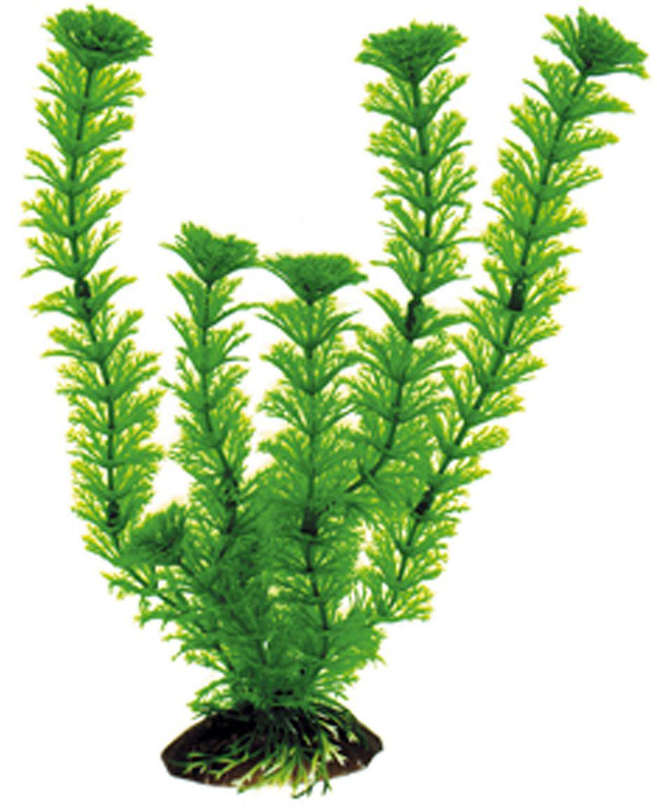 Искусственное растение для аквариума Dezzie, 30 см. 56020480120710Подводное искусственное растение для аквариума Dezzie является неотъемлемой частью композиции аквариума, радует глаз, а также может быть уютным убежищем для рыб и других обитателей аквариума. Пластиковое растение имеет устойчивое дно, которое не нуждается в дополнительном утяжелении и легко устанавливается в грунт. Растение очень практично в использовании, имеет стойкую к воздействию воды окраску и не требует обременительного ухода. Его можно легко достать и протереть тряпкой во время уборки аквариума. Растения из пластика создадут неповторимый дизайн пресноводного или морского аквариума.Высота растения: 30 см.