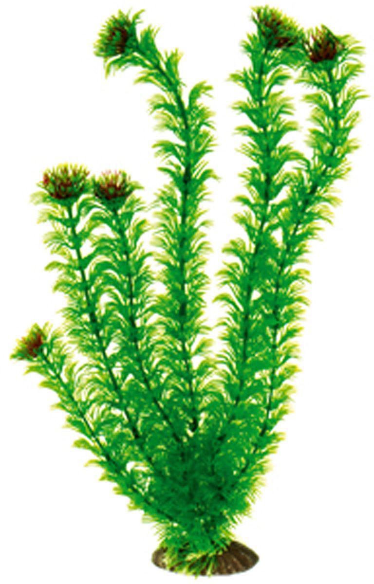Искусственное растение для аквариума Dezzie, 40 см. 5602083GRAVEL 039/3,5Подводное искусственное растение для аквариума Dezzie является неотъемлемой частью композиции аквариума, радует глаз, а также может быть уютным убежищем для рыб и других обитателей аквариума. Пластиковое растение имеет устойчивое дно, которое не нуждается в дополнительном утяжелении и легко устанавливается в грунт. Растение очень практично в использовании, имеет стойкую к воздействию воды окраску и не требует обременительного ухода. Его можно легко достать и протереть тряпкой во время уборки аквариума. Растения из пластика создадут неповторимый дизайн пресноводного или морского аквариума.Высота растения: 40 см.